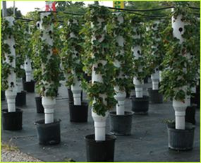 4 or 6 inch pvc pipe, with holes drilled in it, filled with soil and used as a vertical growing structure