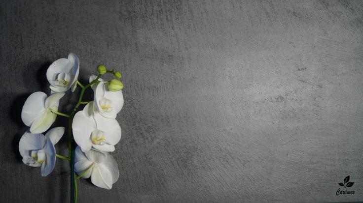 Carameo Wand- & Bodenbeschichtung für fugenlose Bäder.