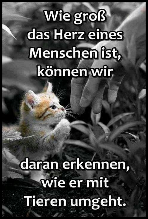 Tierliebe ... Menschen