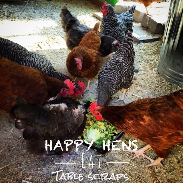 Girl With A Garden - Happy Hens Eat Table