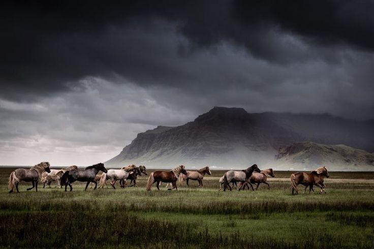 Horses & Storm Clouds