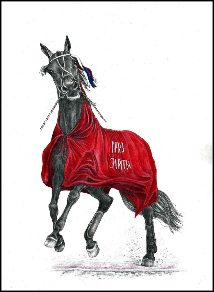 17 Best images about Harness racing drawing on Pinterest ...