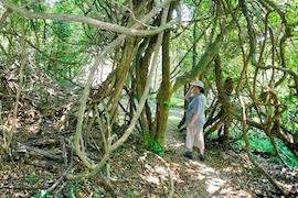 iDube Trail - Queen Elizabeth Trail