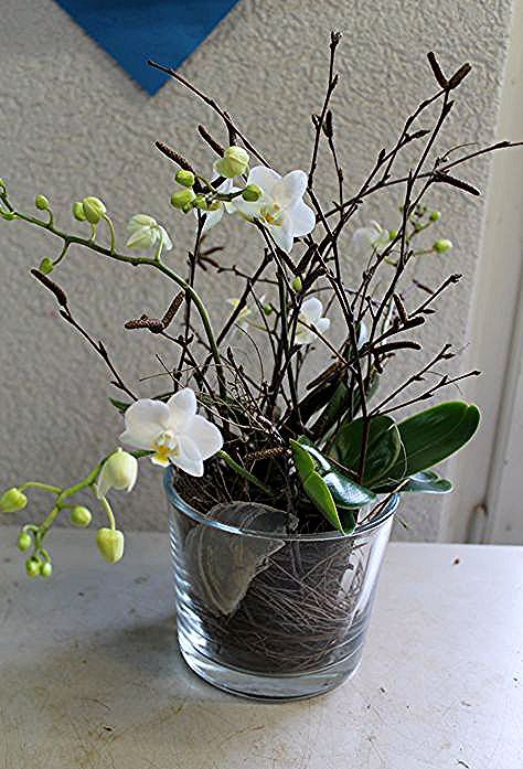 Diy Orchidee Im Glas Simpel Einfach Eintopfen In 2020