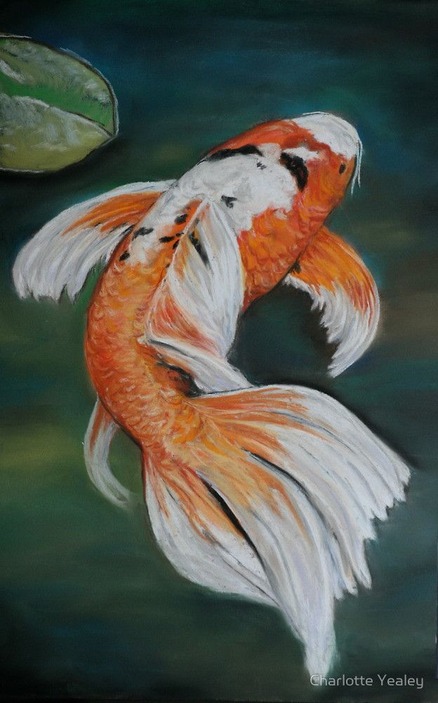 75 best japanese coy fish references images on pinterest for Butterfly koi fish pictures