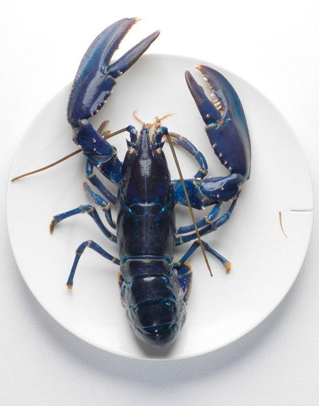 Nicolas Buisson Photography - Food - 16. Homard Breton