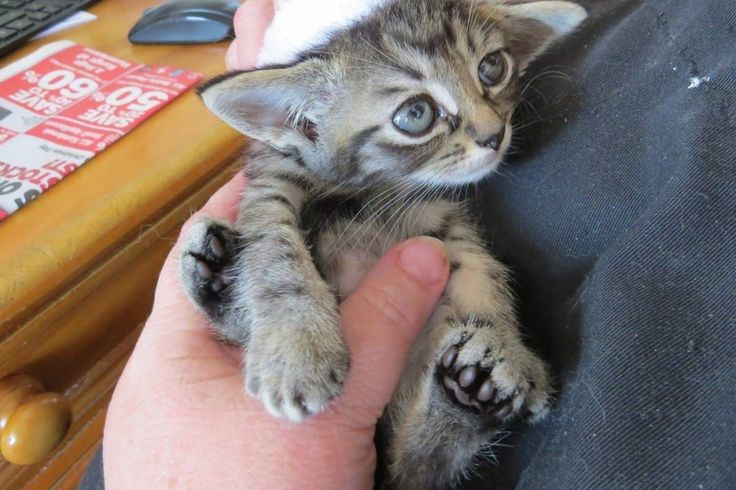 Tiniest Kitten Rescued by Big Guy They Never Expected, Now 2 Years Later...