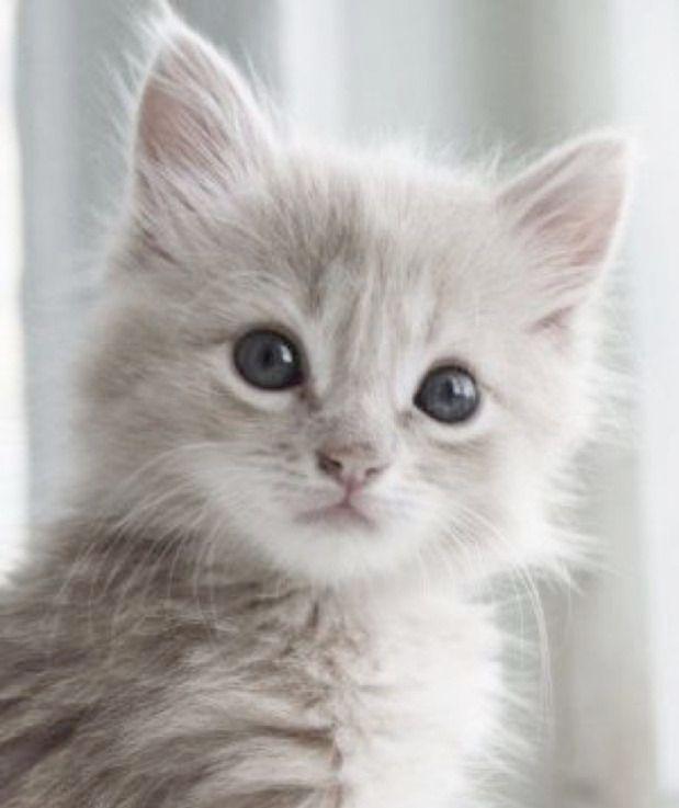 Pictures Of Cute Kittens For Sale Against Cute Cartoon Animals And Food Near Cute Kittens Profile Pictures Next Cute Cat Names Beginning Wit Gattini Piccoli Adorabili Gattini E Gattini