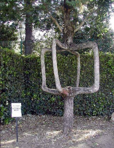 15 Strangely Shaped Trees - Oddee.com (strange trees, cool trees...)