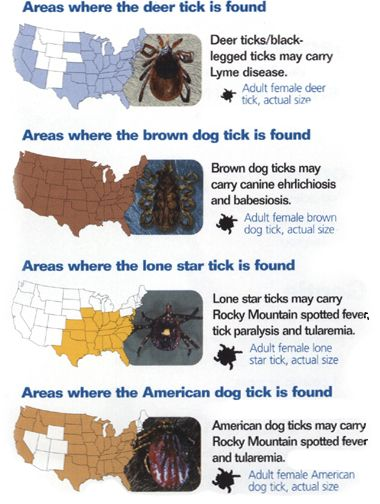 Here is an overview of the three main tick borne diseases: Lyme Disease, Rocky Mountain Spotted Fever, and Ehrlichia. Description from alllabs.com. I searched for this on bing.com/images