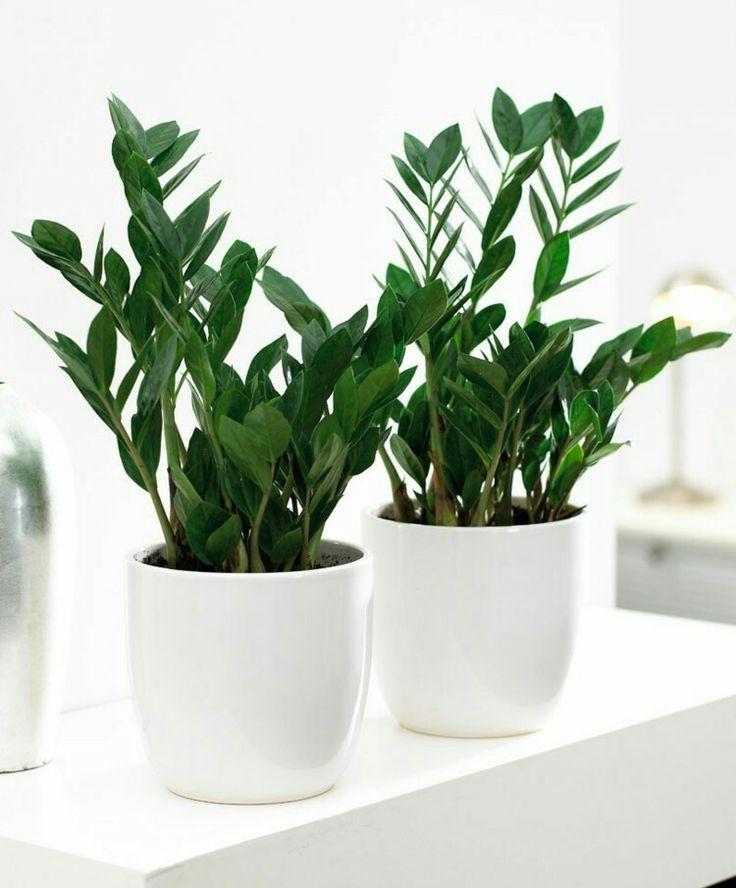 die besten 25 badezimmerpflanzen ideen auf pinterest pflanzen im badezimmer wohnung pflanzen. Black Bedroom Furniture Sets. Home Design Ideas