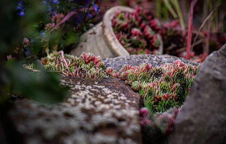 Gardening Garden Blumen Flora Stonegarden Plants Pflanzen Garten Nature Natur Landscape Landschaft Naturelover Traveler Travel Resim