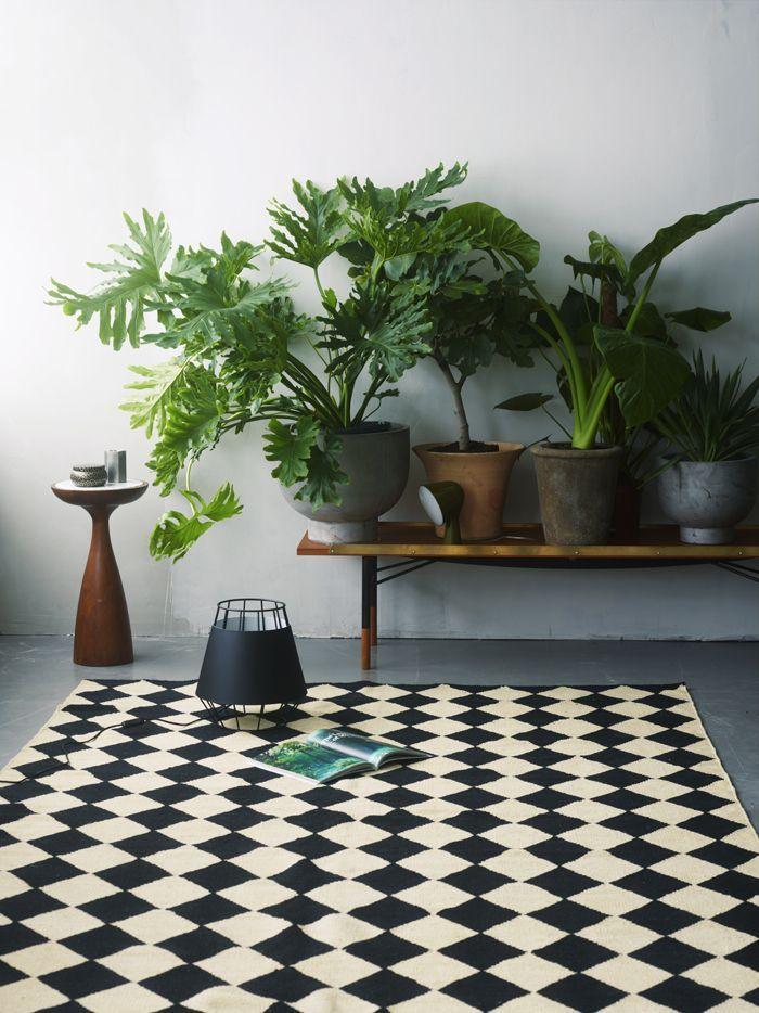 12 Intérieurs Charmants Avec Des Plantes