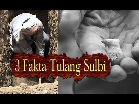 Pembuktian Setelah Kiamat Manusia Bangkit dari Tulang Sulbi dan Sabda Na...
