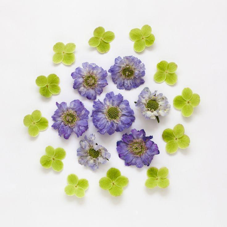 Flowers / Candy Pop: http://www.candypop.uk.com/