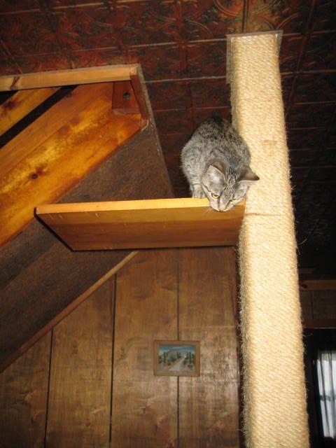 Ninja kitty 2