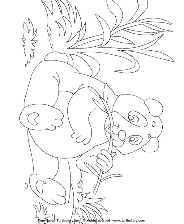Amazing Secret Garden Coloring Book Huge Curious George Coloring Book Flat Skull Coloring Book Marvel Coloring Books Young Pantone Color Books ColouredFairy Coloring Book The 25  Best Panda Coloring Pages Ideas On Pinterest | Pictures Of ..