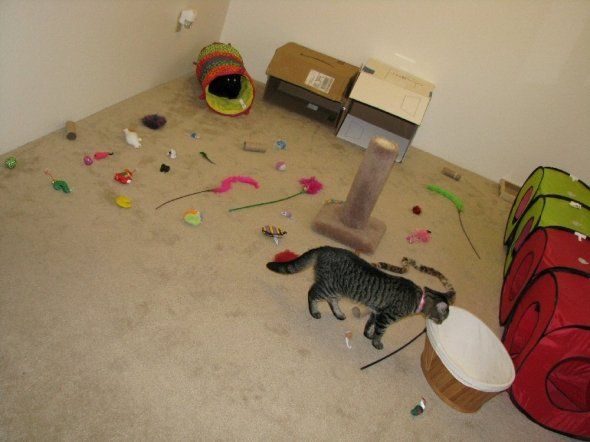 1000 Ideas About Homemade Cat Toys On Pinterest Cat