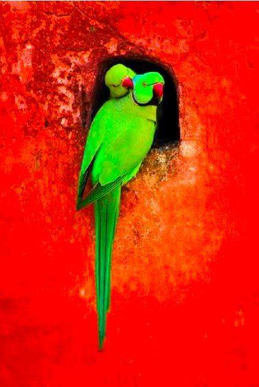 inspiring colourful birds