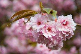 Blume, Rosa, Blütenblätter, Baum