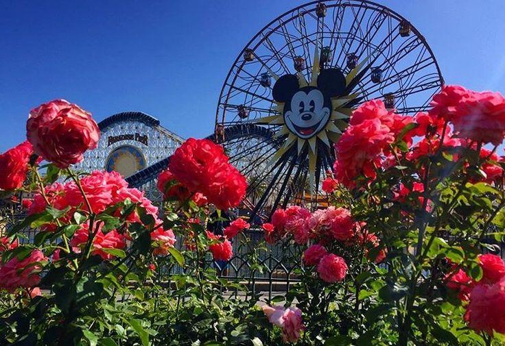 Disneyland California Advantage