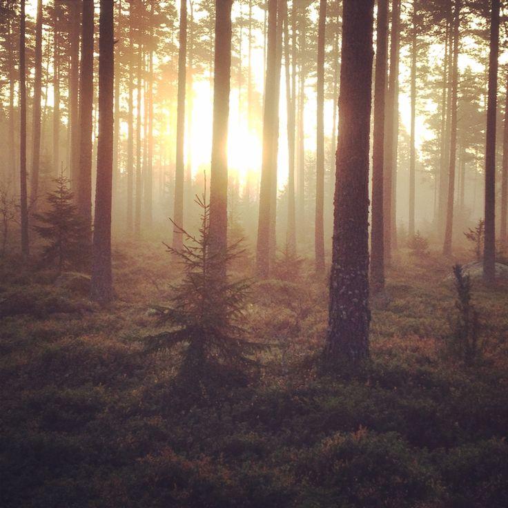 Morgon i storskogen