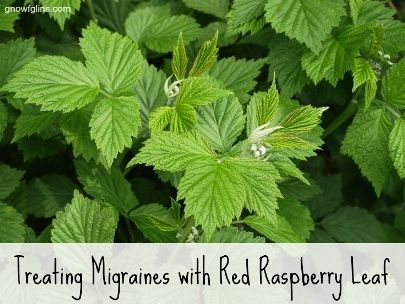 How To Treat Migraines With Red Raspberry Leaf | Health & Natural Living