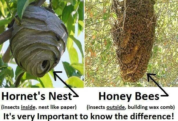 Hornet nest vs bee hiv...