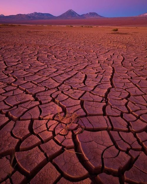 An image so real that you can almost feel the dryness of the cracking desert floor. Natural colors captured like never before. See what @petercoxphotography captured when he travelled with the new IQ3 100MP Trichromatic Digital back to the exquisite Chilean Atacama Desert: Colour rendition has been gradually improving in digital photography and having the flexibility to choose your own interpretation of the colours in a scene is a powerful tool for many photographers. For me rendering a…