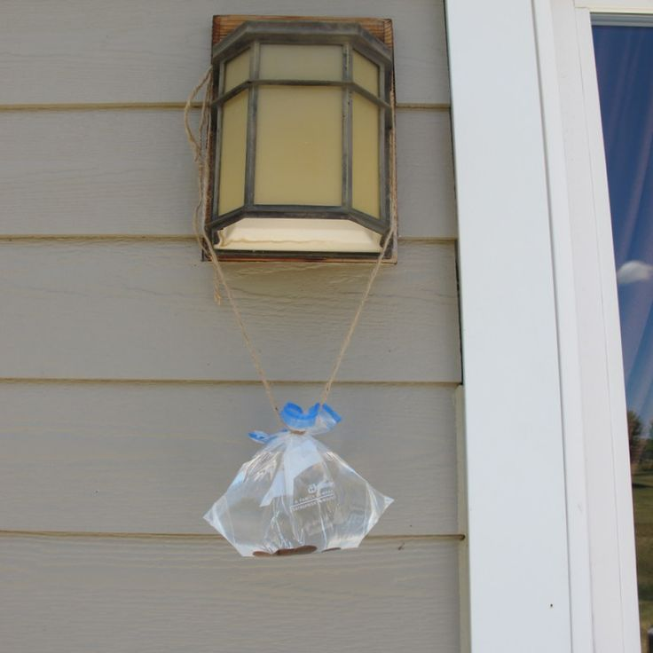 Homemade Fly Repellent: Ziploc Bag, Water & Pennies!- What Rose Knows