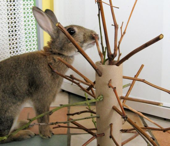The Stick Monster (New Bunny Toy Idea) - they also enjoy apple tree branches/logs to chew
