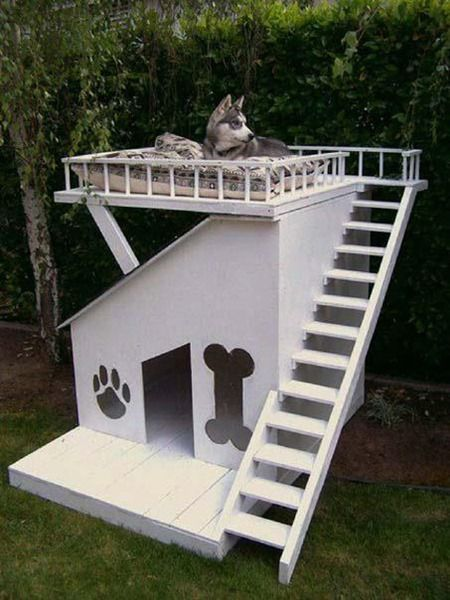 HUSKY DOG HOUSE ~ I read that Huskies like to sit on top of their houses, in freezing winter temps, and feel the ice cold wind blow through them.  This would be perfect!