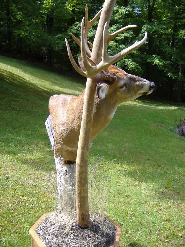 1000  images about buck mount ideas on pinterest