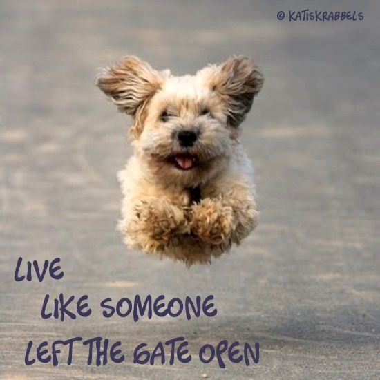 Kati's krabbels: Quotes and Pics 64, A dog is a man's best friend