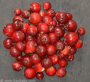 Fruitiers tropicaux - Plantes et graines - Vente par correspondance