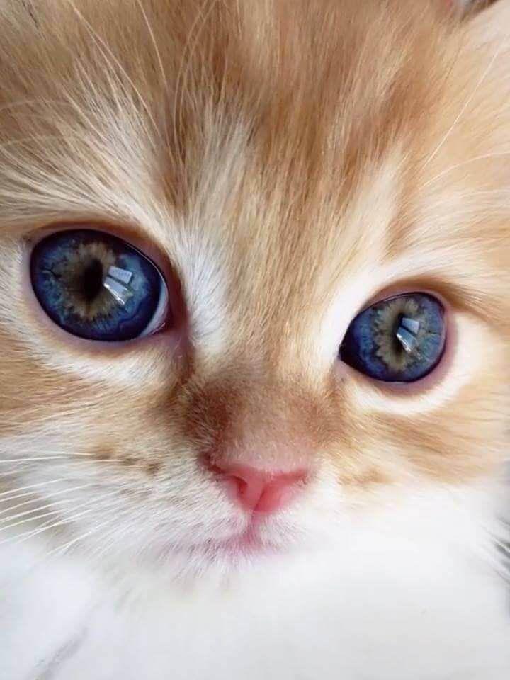 Les gens partagent des gros plans des yeux de leur chat et nous ne pouvons pas a…