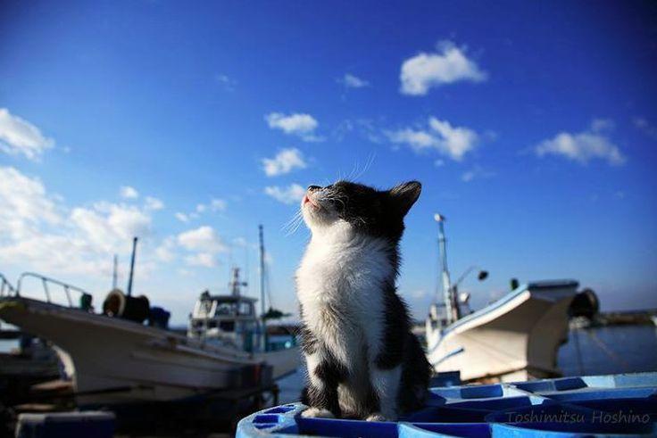 写真展「横浜赤レンガ倉庫 ねこ写真展 2016〜今を生きる猫たちのキロク・キオク〜」が、横浜赤レンガ倉庫1号館2階で開催されます。期間は2016年11月2日(水)から7日(月)までです。今回はそんな「横浜赤レンガ倉庫 ねこ写真展 2016〜今を生きる猫たちのキロク・キオク〜」についてご紹介いたします。
