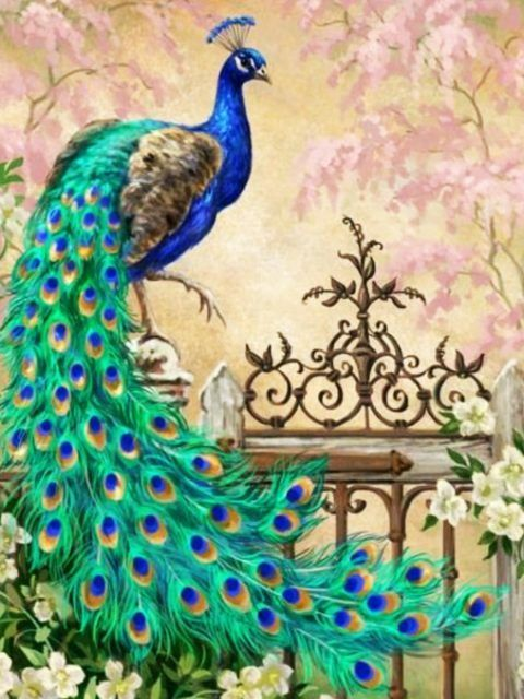 Peacock Hd Wallpapers Backgrounds Wallpaper Peacock Wallpaper Peacock Artwork Peacock Painting