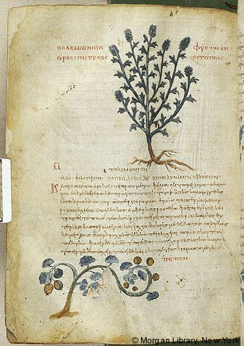 De materia medica, MS M.652 fol. 137v - Images from Medieval and Renaissance Manuscripts - The Morgan Library & Museum