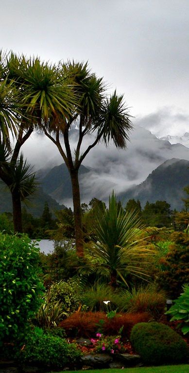 93 best images about nz native plants  trees  flowers  on pinterest