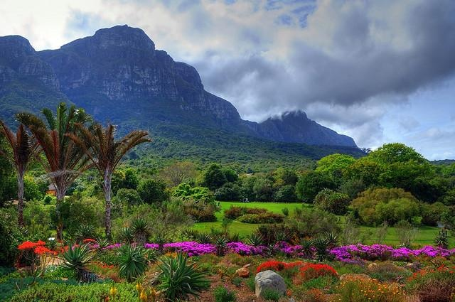 Kirstenbosch gardens South Africa