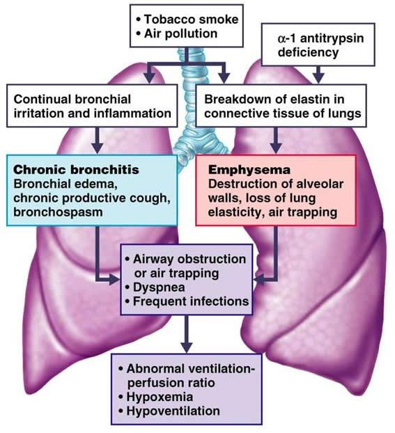 effects of smoking on respiratory system Edexcel gcse pe respiratory system smoking can have serious adverse effects on this process smoke from cigarettes damages the alveoli, making them less stretchy, causing breakages in the thin walls which then in turn leads to larger less efficient air sacs.