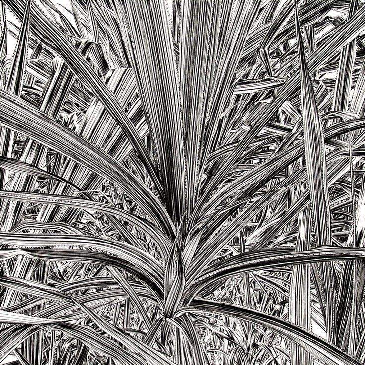 Pandanus a copperplate engraving by Dreipunkt artist Alexander Arundell. The plant was drawn in the palmhouse of Kew Gardens and cut over a period of three weeks. #pandanus #alexanderarundell  #kewgardens #botanicalprint  #engraving #london #blackandwhite #square
