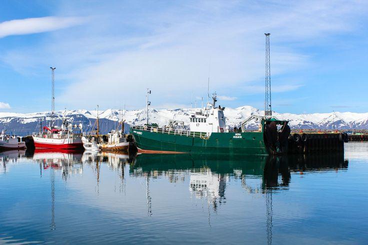 Island Tipp: Wale beobachten in Husavik