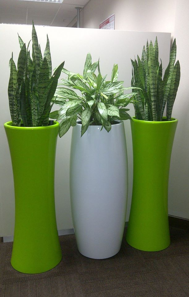 Palm Grove Nursery. Fibreglass Planters. palmgrove@telkomsa.net