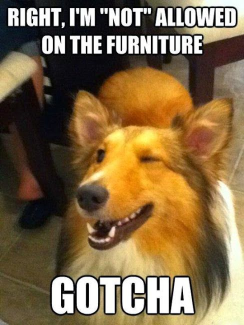 Exactly what Polly Dog does as she jumps up onto the sofa, Gotcha
