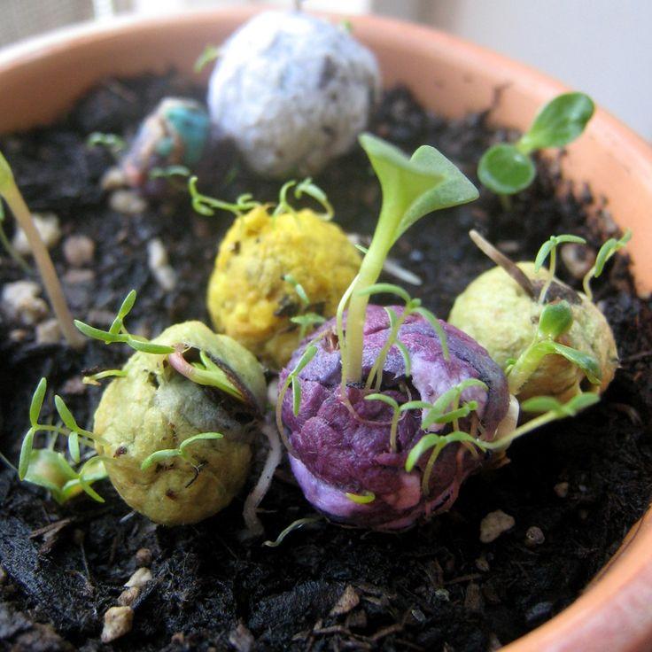 Como fazer uma bomba de semente! – Ideias Diferentes