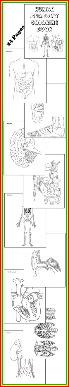 """* SCIENCE DOWNLOAD ~ HUMAN ANATOMY COLORING BOOK * 32 diagrams to color and label! Download Club members can download @ http://www.christianhomeschoolhub.spruz.com/science-1st---12th.htm (Under """"The Human Body - Unit Studies)"""