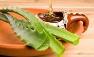 Αλόη: Ένα φαρμακείο σε γλάστρα... ~ Η τροφή μας το φάρμακό μας