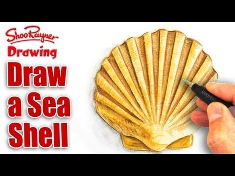 How to draw a seashell with Watercolour Pencils
